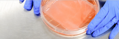 Endotoxin Testing for Cell and Gene Therapy Products